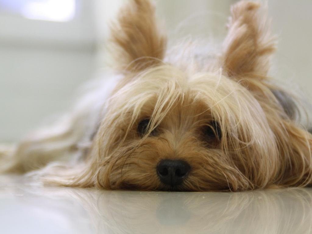 Guarda y custodia de mascotas: ¿Quién se queda con ellas en caso de separación o divorcio?