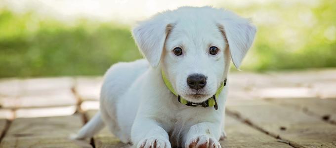 Nos vamos a divorciar. ¿Quién se queda con el perro?
