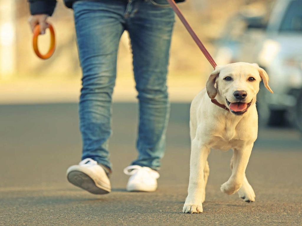 ¿Soy responsable de los daños causados por el perro de mi amigo mientras lo tengo?