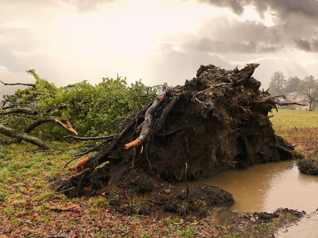 Un temporal ha destrozado mi jardín ¿A quién reclamo?