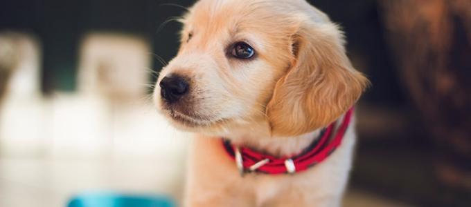 ¿Es legal comprar o vender mascotas en Internet?