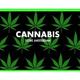 En el estado actual del Derecho de la Unión, un signo que alude a la marihuana no puede ser registrado como marca de la Unión