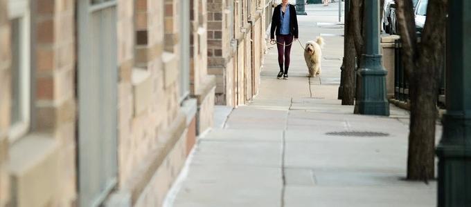 Los bandos municipales restringiendo y /o limitando los paseos con los perros no son válidos durante el Estado de Alarma