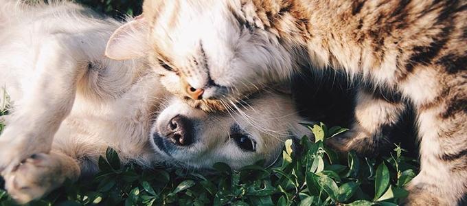 ¿Qué ocurre en un divorcio con nuestras mascotas?