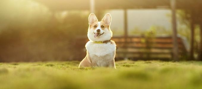¿Quieres dejar parte de tu herencia a tu mascota? En España no es posible