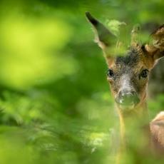 INTERcids apoya la elaboración de una Ley básica de Agentes Forestales y Medioambientales