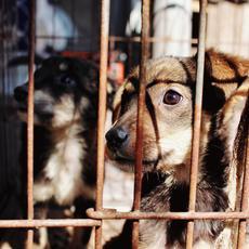 INTERcids insiste en que la nueva Ley de Enjuiciamiento Criminal debe adecuarse también a los delitos contra los animales