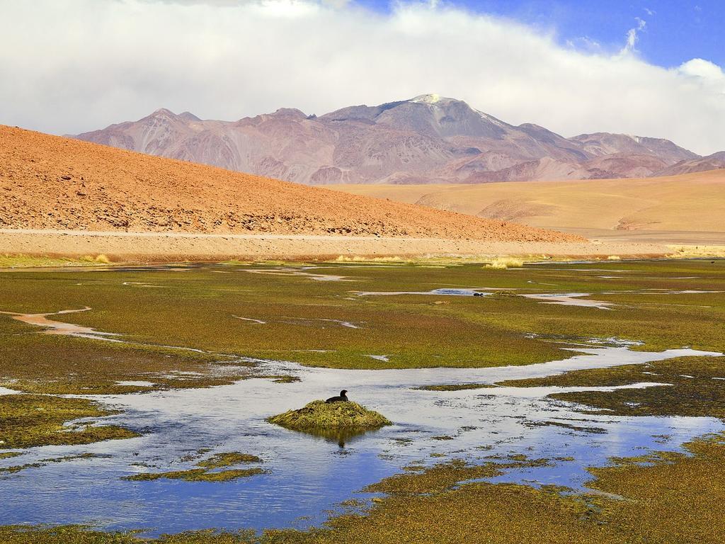 Breve retrospectiva al origen del Derecho a vivir en medio ambiente libre contaminación en la Constitución Política de la República de Chile de 1980