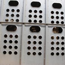 INTERcids reclama medidas que conduzcan a la desaparición del transporte de animales vivos