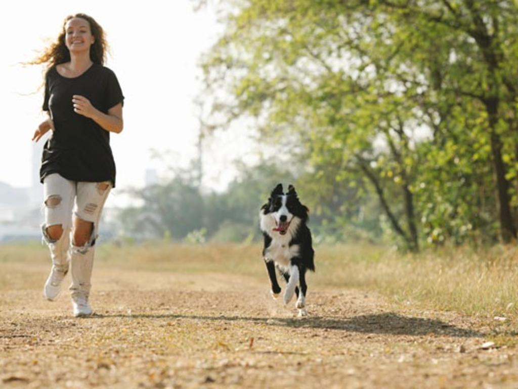 Cómo actuar ante la pérdida o robo de tu mascota