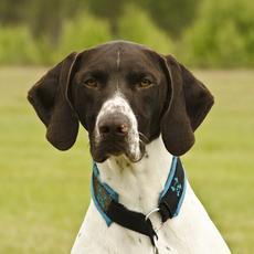 Condenado a siete meses de prisión por tratar de matar a su perra, utilizada para la caza