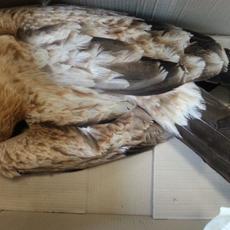 La Justicia avala la responsabilidad de las compañías eléctricas ante la electrocución de aves