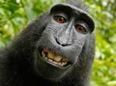 simio selfie